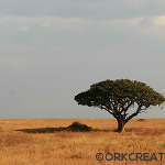 Photo du mois #6 : Safari