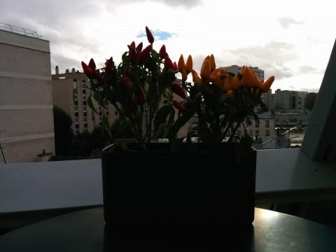 Photo prise par Nexus 5 sans HDR