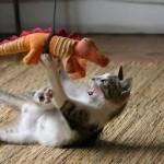Chats vs Dragons – Les chatons vont latter des cracheurs de feu !