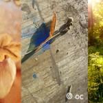 [Sondage] Orkcreation – votez pour la photo du mois !