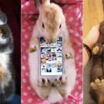 Des amateurs pour un étui de smartphone en vrais lapins ?